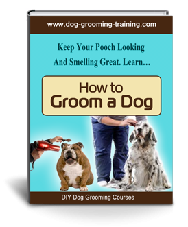 How to Groom a Dog | Dog grooming