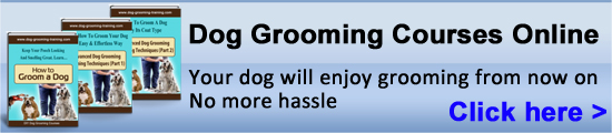 Dog Grooming Courses|how to groom a dog