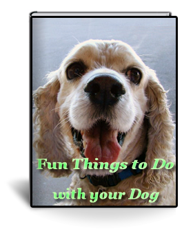 fun things to do with your dog | dog grooming training