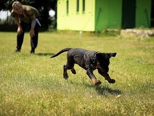 puppies enjoy experiencing
