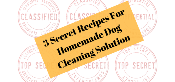 3 Secret Recipes For Homemade Dog Cleaning Solution