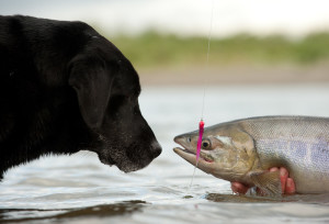 do dogs eat fish