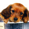 Images for Dog -  Wallpaper - Cute - Funny - Beautiful Puppies96