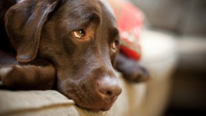 Your Behavior and Your Dog