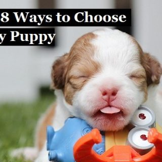 The Top 8 Ways to Choose a Healthy Puppy