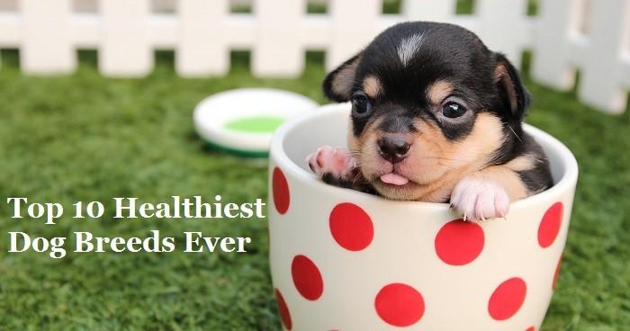 Top 10 Healthiest Dog Breeds Ever