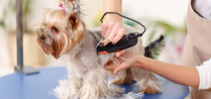 How to groom a dog with electric clippers solutioingenieria Choice Image