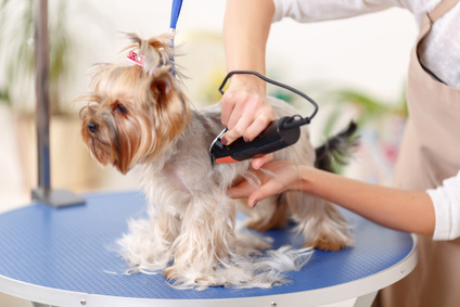 How To Groom A Dog With Electric Clippers