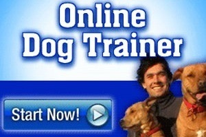 Doggy Dan's Online Dog Trainer